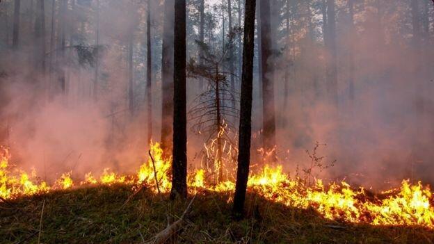 دلیل آتش سوزی ها در قطب شمال