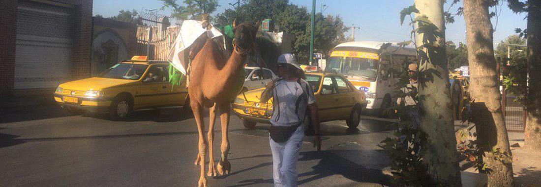 گردشگر ایرانی با شتر به سفر دور دنیا رفت ، سفری که بیش از دو سال طول می کشد!
