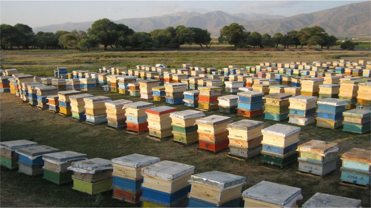 خسارت میلیاردی کرونا به زنبورداران مازندرانی