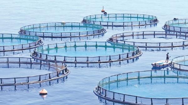 طراحی سایت: 85 درصد پیشرفت فیزیکی سایت پرورش ماهیان سردابی خزل غربی کنگاور